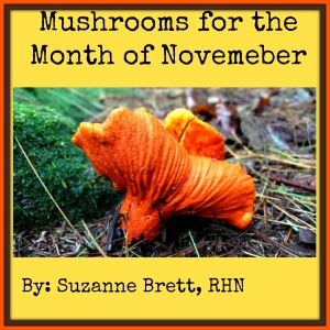 mushrooms for Novemeber